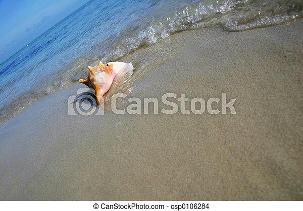 Conch on the Beach - csp0106284