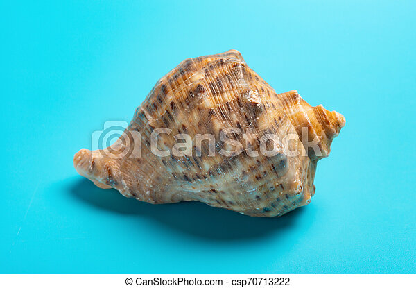 conch shell on a blue background close up - csp70713222