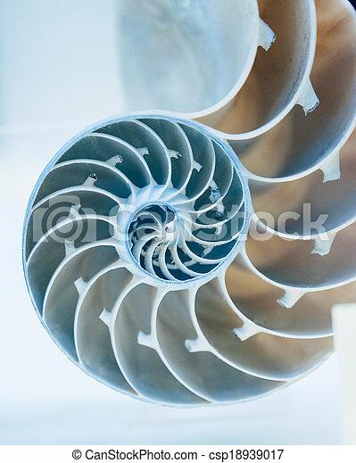 concha, afastado, corte, nautilus - csp18939017