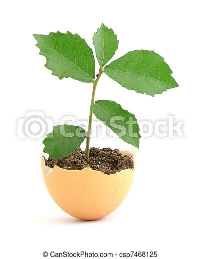 concha, crescendo, fundo, planta, ovo, verde branco - csp7468125