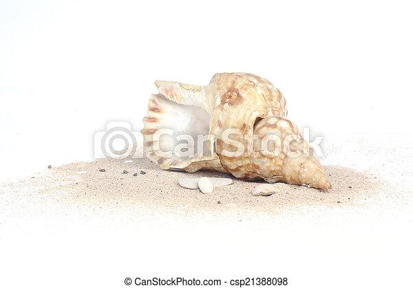 Concha de mar en arena aislada en fondo blanco - csp21388098