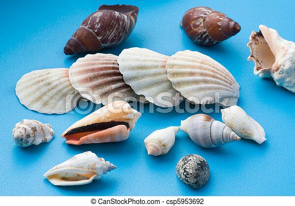 Decoro concha de mar azul - csp5953692