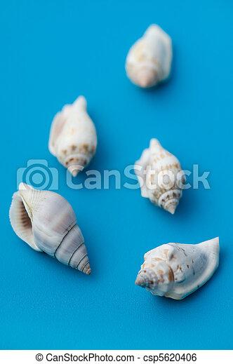 Concha de mar en azul - csp5620406