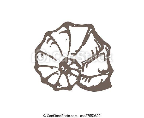 Dibujo de la concha marina grunge - csp37559699