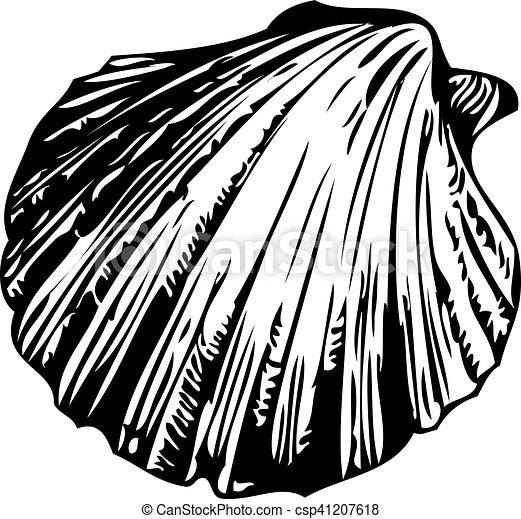 Concha marina - csp41207618