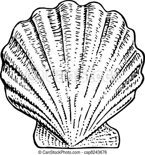 Concha marina - csp8243676