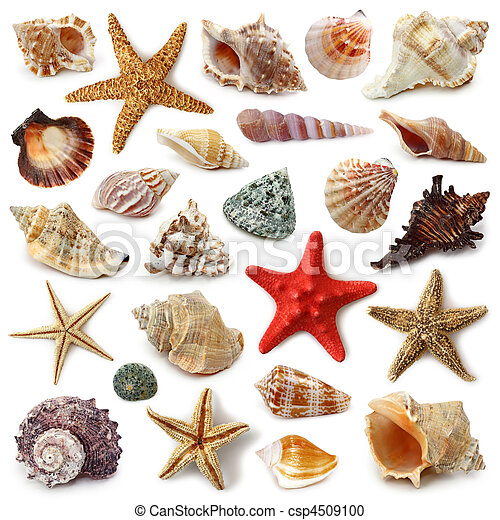 Coleccion de conchas marinas - csp4509100