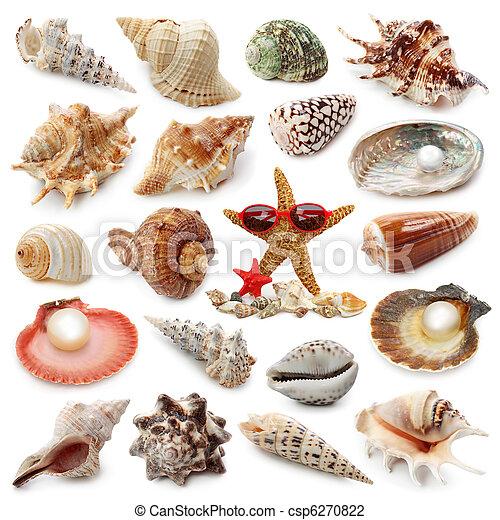 Colección de conchas marinas - csp6270822