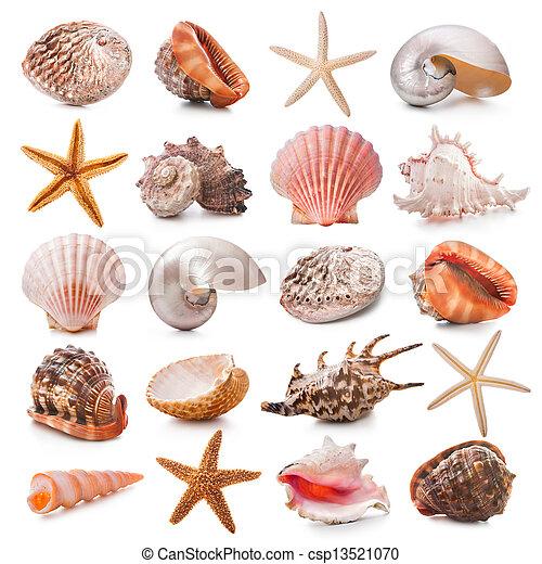 Coleccion de conchas marinas - csp13521070