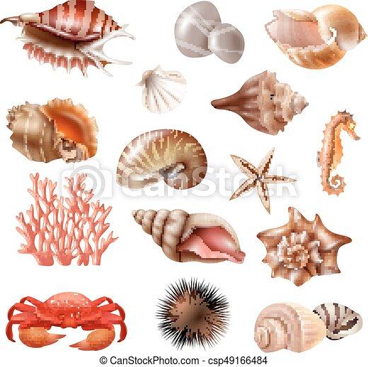 Conchas marinas realistas - csp49166484