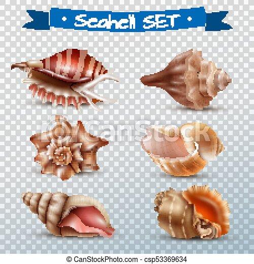 Conchas transparentes - csp53369634