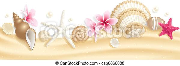 Cabeza de concha de mar - csp6866088