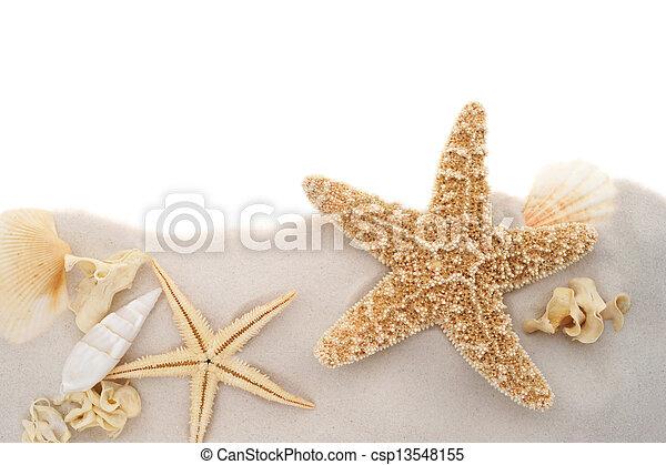 Estrellas de mar y conchas - csp13548155