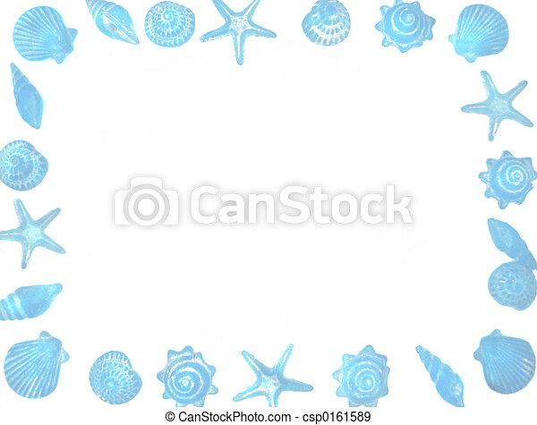 Frontera de conchas marinas - csp0161589