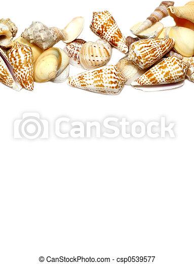 Frontera de conchas marinas - csp0539577