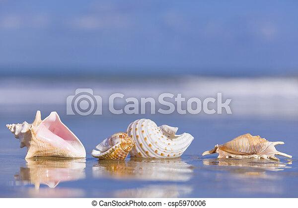 Concha de mar - csp5970006