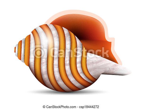 Concha marina - csp18444272