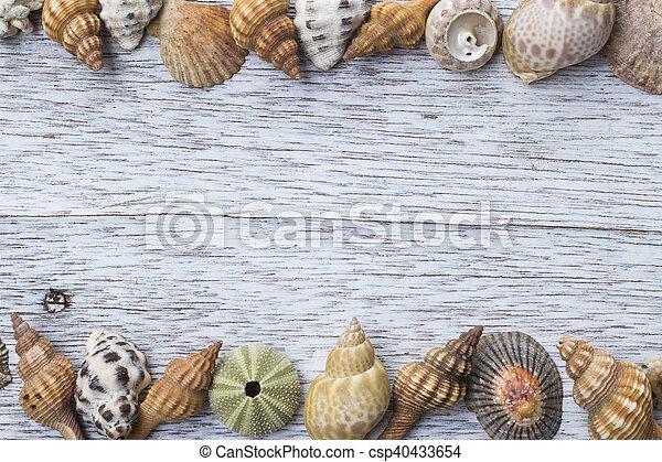 Conchas marinas - csp40433654
