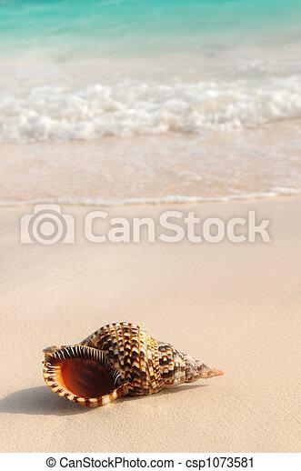 Conchas marinas y olas marinas - csp1073581