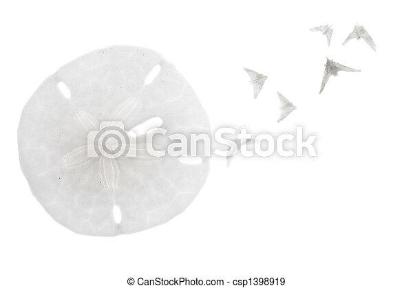 Conchas de mar aisladas de fondo blanco - csp1398919