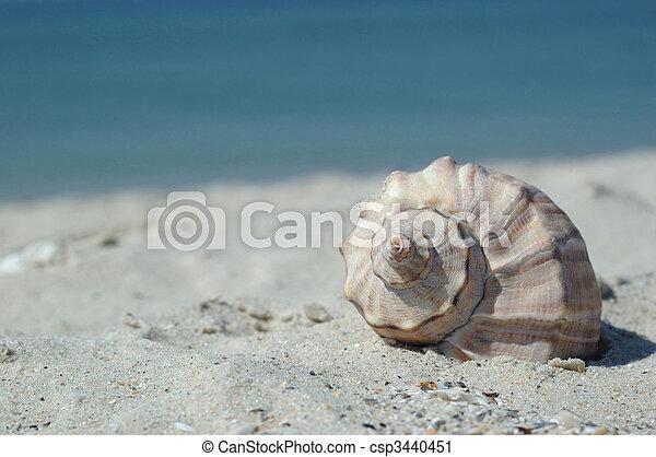 Concha de mar en la playa - csp3440451