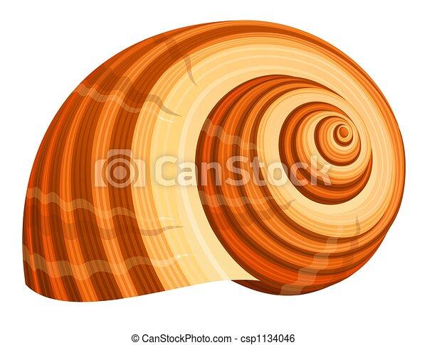 Concha de mar - csp1134046
