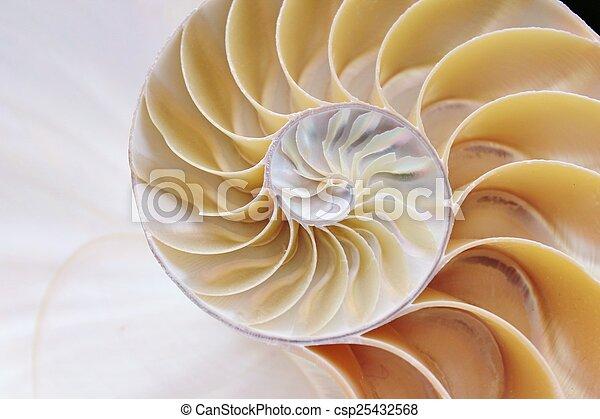 concha, nautilus, cruza-seção - csp25432568