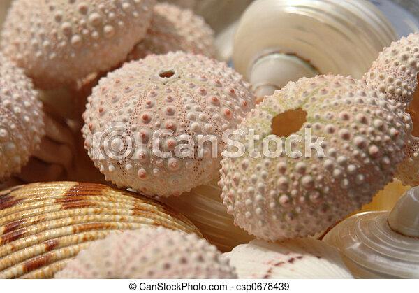 Vario Conchas De Mar - Fotos-de-conchas-de-mar