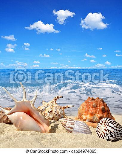 conchas de mar - csp24974865