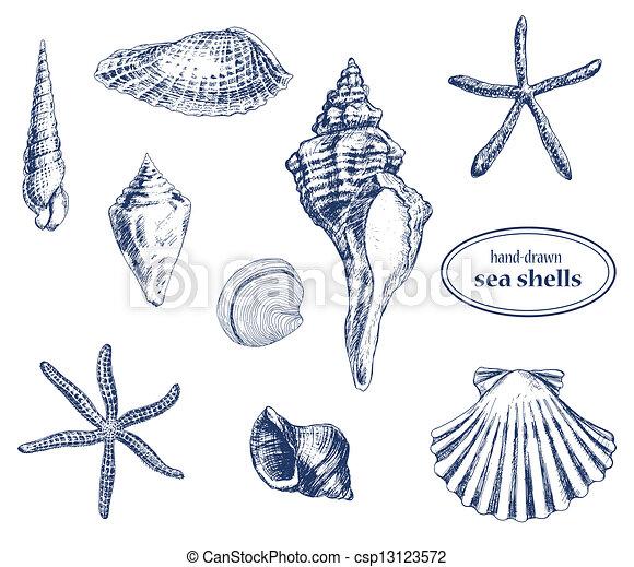 Conchas marinas - csp13123572