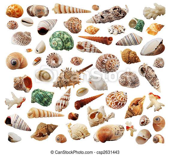 Conchas marinas - csp2631443