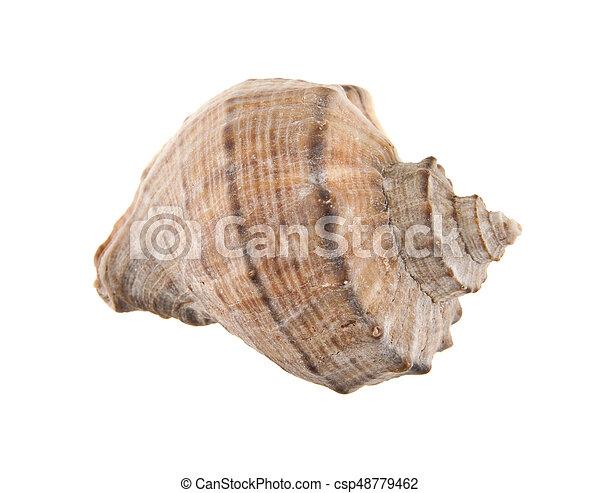 Conchas aisladas en el fondo blanco - csp48779462