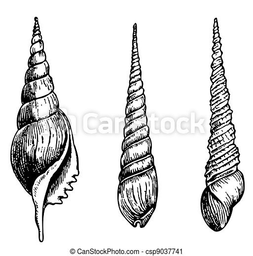 Conchas marinas - csp9037741