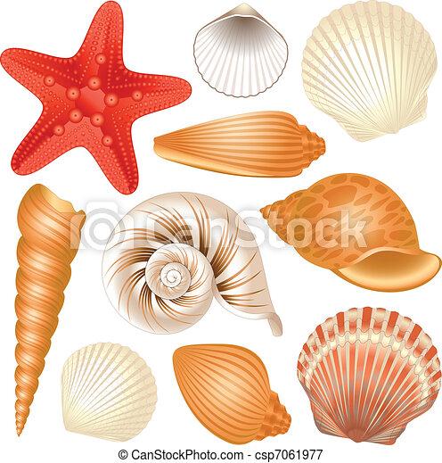 Coleccion de conchas marinas - csp7061977