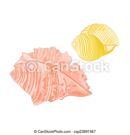 Vector de conchas marinas de colección - csp23891467