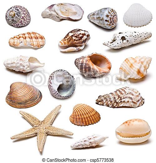 Coleccion de conchas marinas. - csp5773538