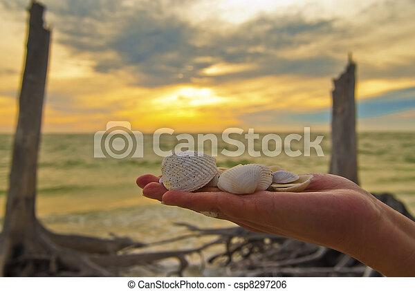 Conchas marinas - csp8297206