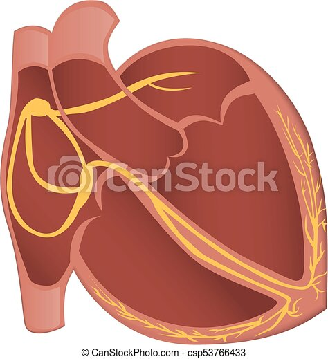 Conducción, corazón, vector, sistema, illustration.