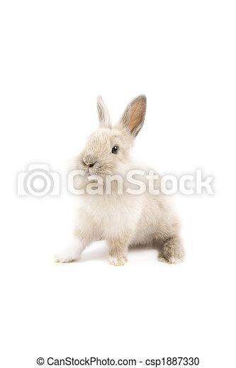 Conejo - csp1887330