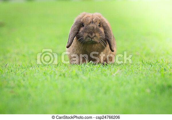 Conejo - csp24766206