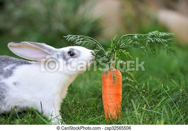 Conejo - csp32565506