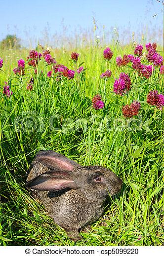 Conejo - csp5099220