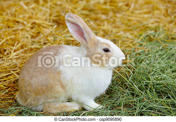 Conejo - csp9095890