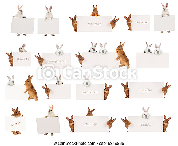 Conejo - csp16919936