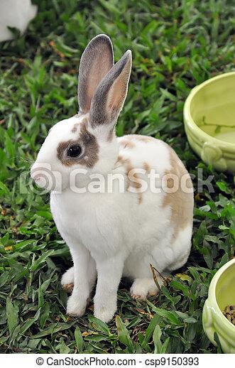 Conejo - csp9150393