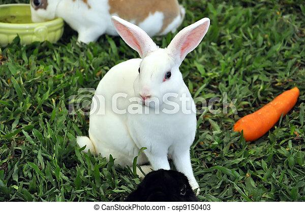 Conejo - csp9150403