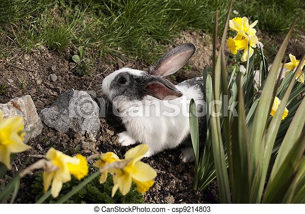 Conejo - csp9214803