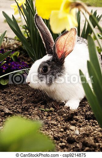 Conejo - csp9214875