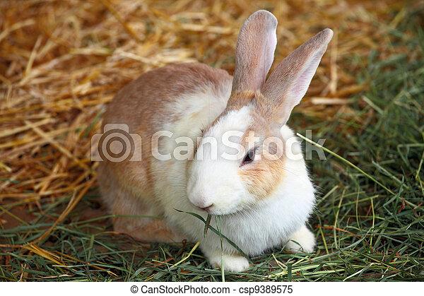 Conejo - csp9389575