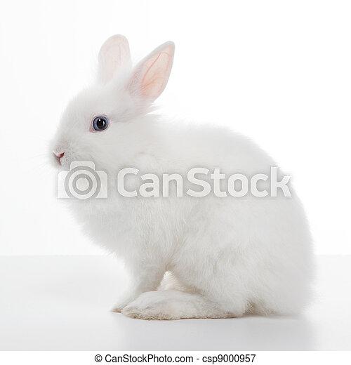 Conejo blanco aislado de fondo blanco - csp9000957